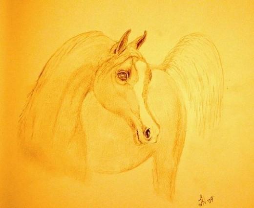 Arabian Horse sketch by Linda Hoxie