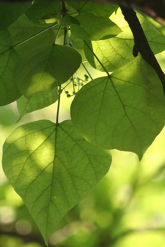 Softly lit leaves
