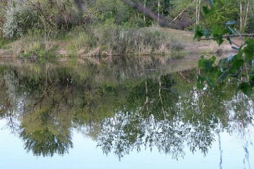Reflection on the pond