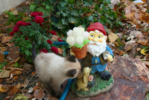 kitten and the knome