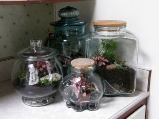 Some Of My Terrariums