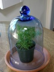 A bell jar terrarium -- another way to go