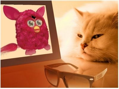 Who Would Have Thought That Even Cats Love Furbies