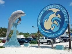 Dolphin Research Center - The best place in the Florida Keys for kids!