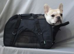Teddy (French Bulldog) in the Comfort Carrier