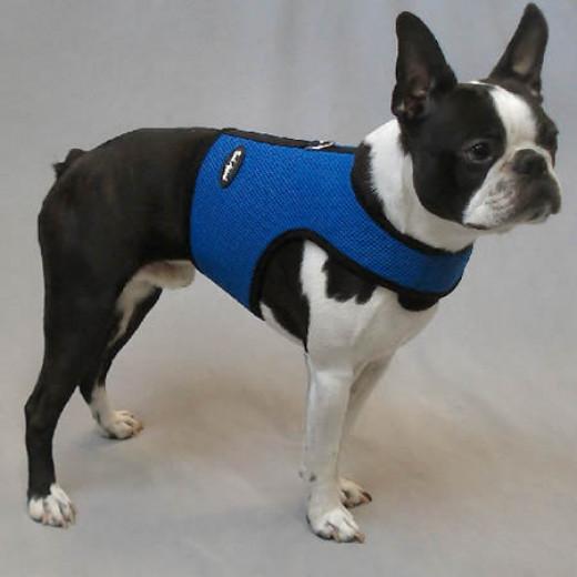 Booker (Boston Terrier) in the Wrap-n-Go