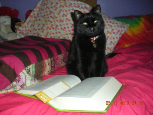 but have you heard of a book cat?This is my cat Sully and she LOVES to 'read' with me. More like bite bookmarks & edges of books