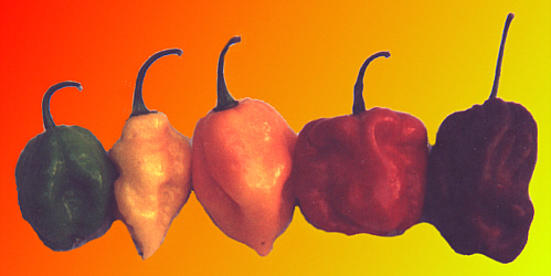 Peppers that contain capsaicin.