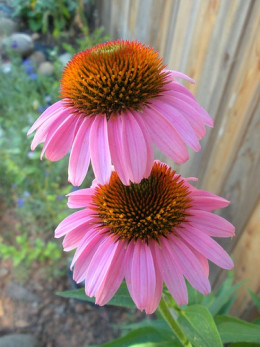 Visit My Nature Study Blog! Click the Photo!