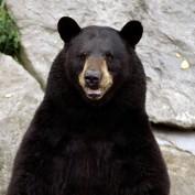 mattressguru profile image