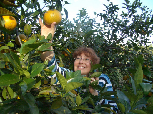 Citrus Magic smells like a fresh picked orange!  This is my best friend, Donna, when she visited me in Florida!