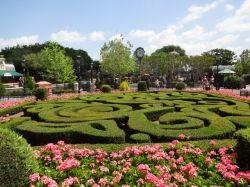 Sensational Sculpted Garden