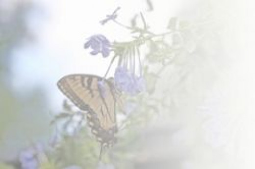Butterfly background