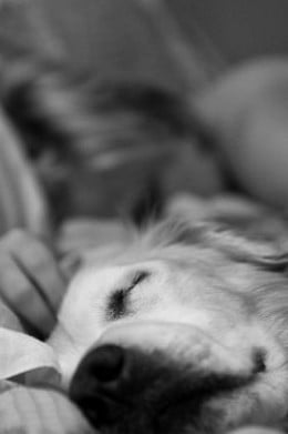 Dogs also dream in their sleep.