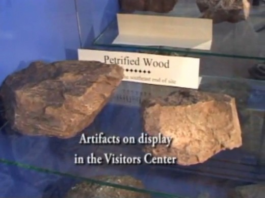 Petrified Wood in the Museum in Turkey