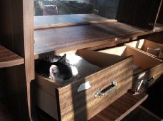 Cat Sleeping in Open Drawers - Photo Credit - Elsie Hagley