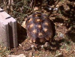 tortoise outside