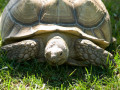 What Are Tortoises Afraid Of?
