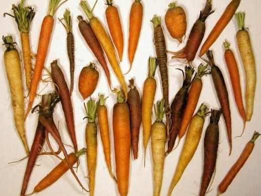 Carrot Diversity. Photo Credit - http://en.wikipedia.org/wiki/Carrot
