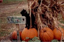 My Cat Mojo Wishing You A Happy Halloween! Photo by Mona Majorowicz