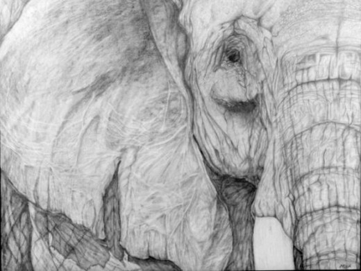 Elephant Pencil Drawing done by Mona Majorowicz