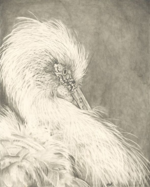 Maguari Stork Pencil Drawing done by Mona Majorowicz
