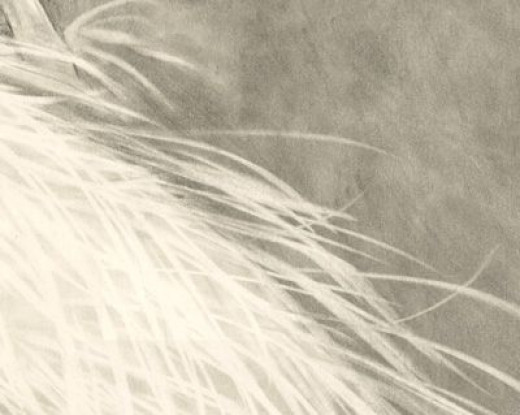 Detail Of Pencil Drawing done by Mona Majorowicz
