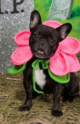 halloween crochet patterns free flower hats for dogs