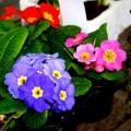 Instant springtime