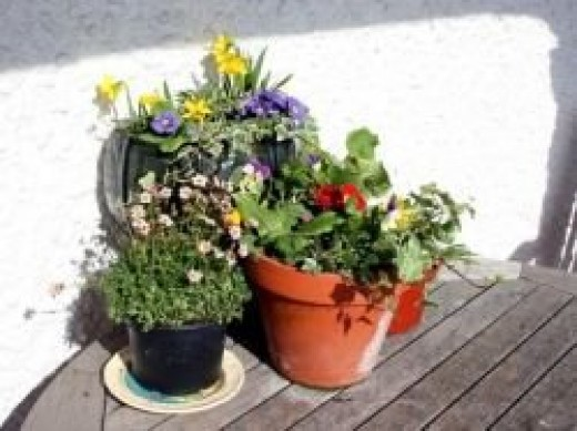 Plant pots of assorted sizes and shapes