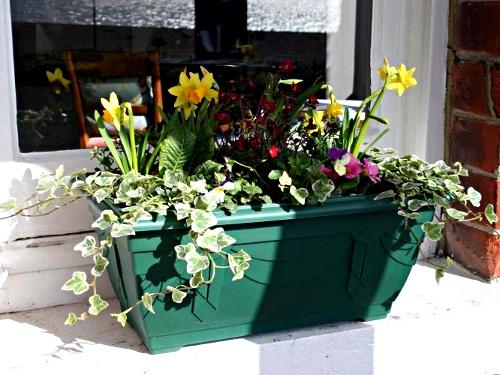 Window box newly planted