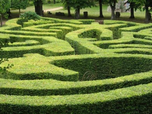 Alice's maze
