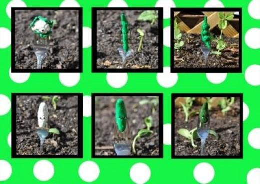 Other Veggies in the Garden