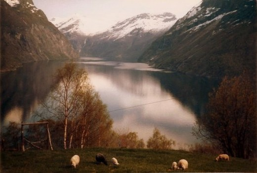Peaceful, pastoral fjords (I believe this is along the way to Geiranger Fjord, however, I wasn't always observant to where we were when we travelled around - I was 16/17 remember - and I didn't take notes always.  Still beautiful!).