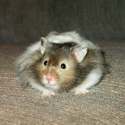 Yes, I know.  Not the dog.  But I had to include a shot of our first pet as a married couple.  Meet Hugo.  The Hamster.  Named after a particularly great busboy on our honeymoon cruise (I know, right?).  We gave him to our neighbors when we moved fro