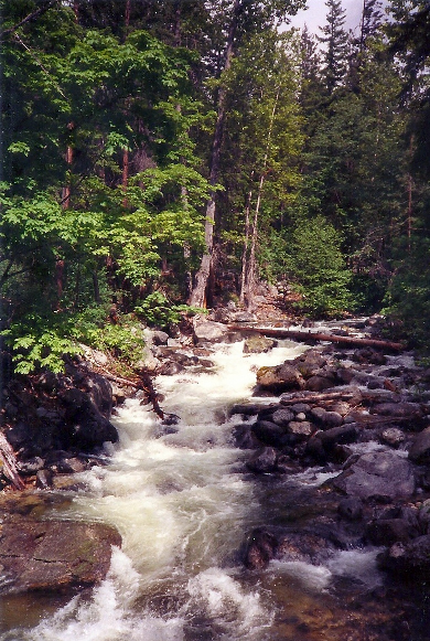 I love mountain creeks.  The power of the rushing water soothes, moves and heals me.