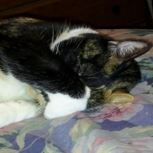 Tinkerbell sleeping