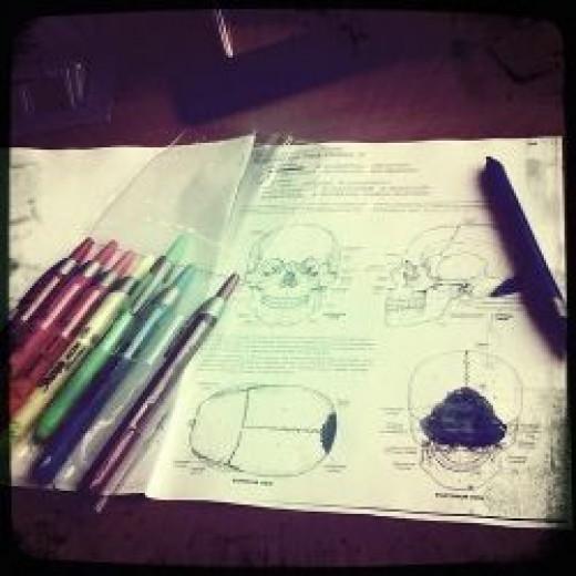 Anatomy Coloring Sheet