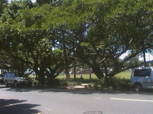 Bulimba Locksmith Memorial Park