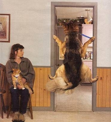 Is this your dog at the Vet?