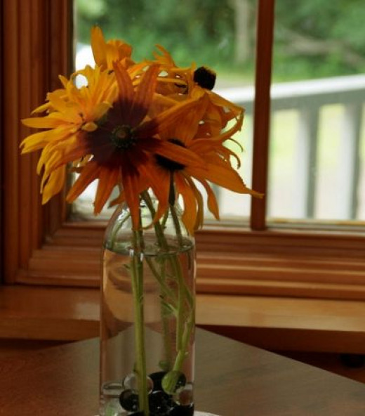 Black Eyed Susans make great Cut Flowers