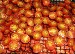 Minnesota Food Dehydration: Roma or Cherry Tomatoes With an Oil and Spice Coating