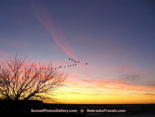 Geese leaving on their night flight to southern climes.