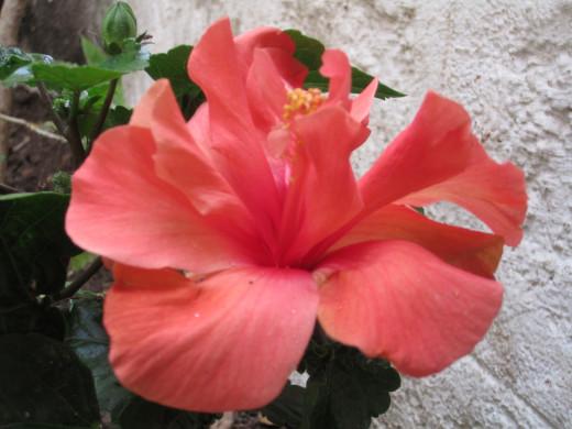 Flowering ones