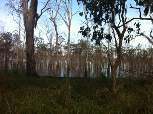 The Wooroolin Wetlands in 2014