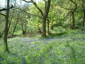 Woodland burial site, Lancashire