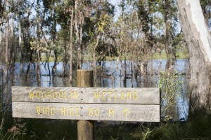 Bird Hide Sign, Wooroolin Wetlands
