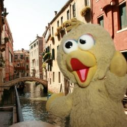 Big Bird in Venice, Italy