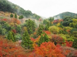 Autumn in Kyoto.  Photo credit: http://www.sxc.hu/profile/michelle