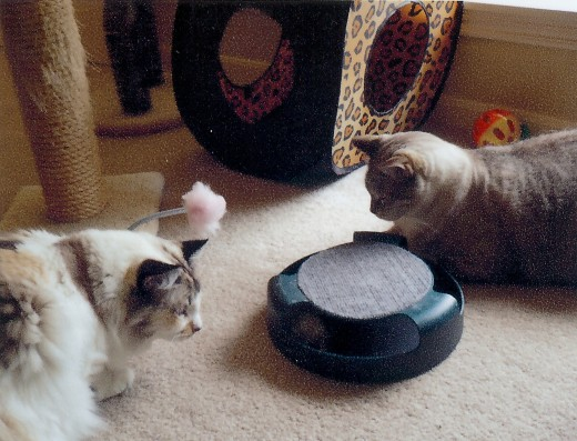 Here we are in our people's bedroom.  They keep lots of nice toys on the ground with which we can play.